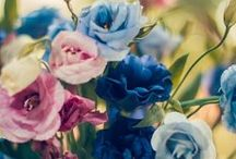 цветы. мои фотографии