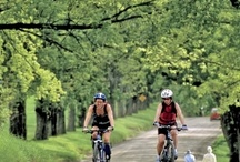 Cycling & Mtn Biking the Kingdom / Grab your bike and come plan and explore!  There are so many routes - each taking you past include shops, accommodations, dining options, museums, attractions and more.