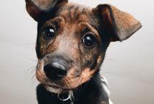 Lès Animaux / pups