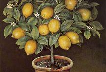 растения и натюрморты
