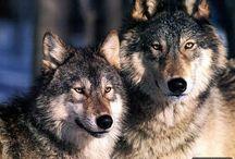 Душа-Волка