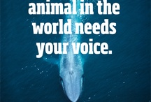 Be the voice/animal rights