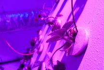 Pyramid Garden / Revolutionary Pyramid Garden Grow Trials Using MCOB Grow Lights (Strawberries)