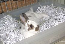 Bunny Ideas and Fun