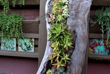 Deco proposals with succulents for interior and exterior