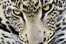 BEAUTIFUL CATS <3 / by Sharon Smith Francis