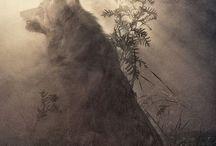 Wolf , beautiful ou yes! :) nature ;)
