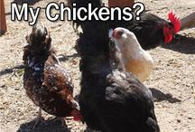 Raising chickens / Tips and tricks