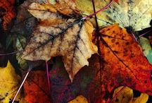 Autumn inspiration / Images of everything fall