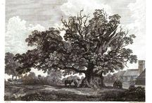 My Regency World - Natural History of Britain / For more information on my Regency World, go to: http://www.lesleyannemcleod.com/regencyworld.html
