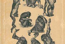 19th century apes