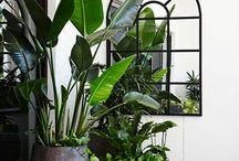 Interior & Plants