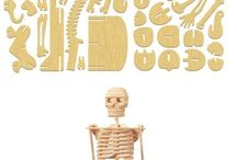 anatomi tubuh