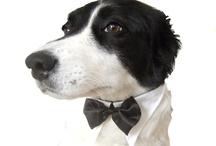 A canine black tie affair