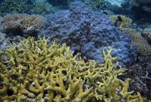 Corals of the Marshall Islands / Coral reefs from the Marshall Island and Kwajalein Atoll