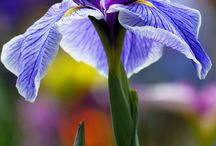 Niebieskie kwiaty -blue flowers