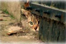 Lieve katten