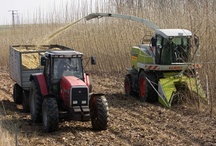 Short Rotation Coppice / by Bioenergy Crops