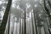Douglas Fir Forest / by Point Reyes National Seashore Association