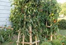 Natures Bounty-Gardening