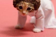 Cute Cats:)