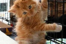 Adopted Cats & Kittens / by Anjellicle Cats