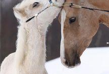 Chevaux d'hiver / Voici des chevaux d'hiver