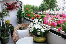Balkony flowers