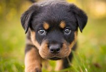 Dogggieee