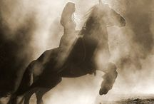 Magnificent Horses!!! / by Renee Hoskins 'Duarte'