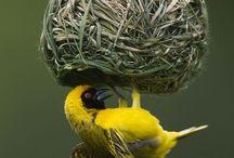 Nest of creatures