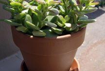 Living: Garden / Plants, succulents, gardening
