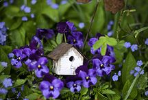 Birds in the Garden / Birdhouses Gardens Country Rustic Cottage