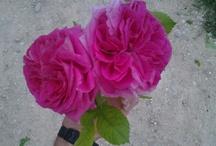 Floresitas