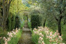 Záhrada :)