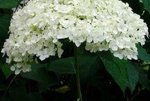 Flowers & Garden - Nature / Magical-Beautiful-Stunning