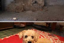 Animals abused