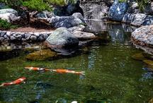 KOI POND/WATER GARDEN