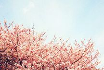 pastel bomen