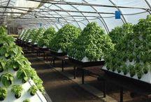 Greenhouse/growroom