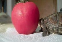 Schattige dieren / Schattige dieren