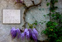 Villa d'Este - Tivoli / One of the most beautiful renaissence villas in Italy