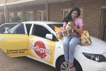 Pedigree / Tailored nutrition for small dogs. #PedigreeSA