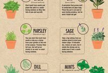 Kebun herbal