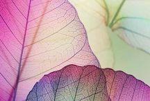 bladeren - leaves