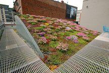 tetőkert zöldtető