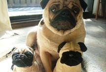 Love my Pug / Love my Pug