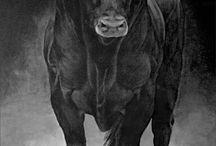 Czarny byk