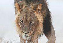 Photography/animals