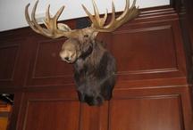 Wildlife on the Wall / STUFF IT ! / by Christopher Jones